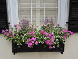 Best Plants For No Sunlight Flower Boxes That Thrive In The Sun Window Box Flowers Window