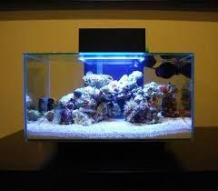 fluval edge marine light 6 gallon readyreef fluval edge nano cube aquarium nice mini reef