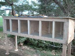 Backyard Quail Pens And Quail Housing by Breeding Northern Bobwhite Quail Backyard Chickens