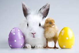 bunny easter easter bunny 2013 with eggs island gymnastics flips