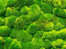 moss art inhabitat green design innovation architecture