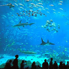 Places To Visit In Each State Top Things To Do U0026 Places To Visit In Atlanta Atlanta Citypass
