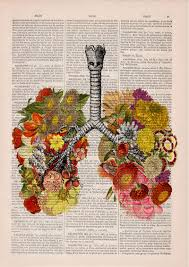 hã ngelen wohnzimmer floral anatomical illustrations on dictionary pages by prrint