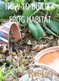 how to build frog habitats rootsy network