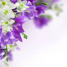 arri鑽e plan du bureau gratuit fonds d écran fleurs mauves maximumwall