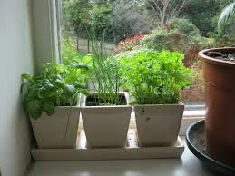 Kitchen Garden Window Ideas by Indoor Windowsill Herb Garden Gardening Ideas