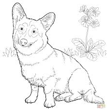 pembroke welsh corgi coloring page free printable coloring pages