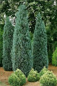 Blue Ribbon Landscaping by 325 Best Softscape Design Images On Pinterest Garden Ideas