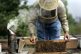 how to sell small farm products online how to buy honey bees for your small farm