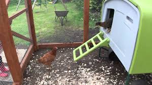 our 9 chickens and their omlet eglu home youtube