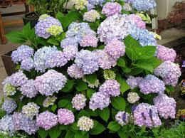 Flowering Shrubs For Partial Sun - partial shade plants zone 5 first home dreams zone 5 perennials