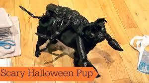 halloween puppies wallpaper scary halloween pup youtube