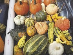 Hayden Pumpkin Patch Hours by High Country Fright Nights Hcnc Highcountrync Com
