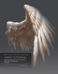 Bird Wing - best 25 bird wings ideas on reference bird