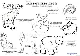 forest wildlife coloring pages eliolera com