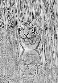 tiger in water sketch by awesome sketches on deviantart