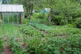 free vegetable garden layout free vegetable garden layout withpanion plants guide backyard home