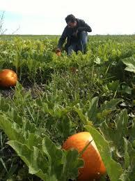 Small Farms Manitoba   Blog Small Farms Manitoba stuart and pumpkin   jpg