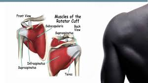 Anatomy Of Shoulder Muscles And Tendons Shoulder Trauma Part 2 Tendons Youtube