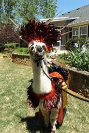 best 20 llama costume ideas on pinterest llamas cardboard
