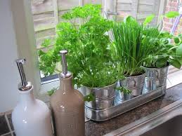 Ideas For Herb Garden Small Herb Garden Ideas