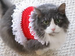 sweaters for cats crochet a sweater for your cat free patterns grandmother s