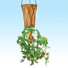 Face Planter Deluxe Revolution Upside Down Tomato Planter The Green Head