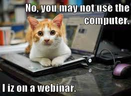 Friday Cat Meme - friday funny cat webinar bowman performance consulting