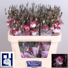 Lisianthus Flower Purple 25in 27 Best Lisianthus Images On Pinterest Products Flowers And