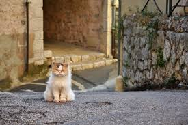 the ultimate list of grumpy cat names u2013 71 ideas find cat names