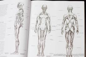 book review anatomy for the artist parka blogs