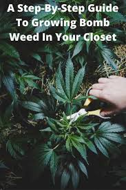 610 best my be leaf in marijuana images on pinterest cannabis