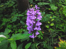 native michigan plants plants amaze me allegan county michigan wild orchids and more