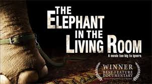 elephant living room rip the elephant in the living room dvd movie with magic dvd ripper