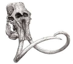 tattoo elephant skull good looking loser online forum tattoos what designs should i get
