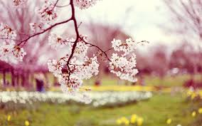 free spring wallpaper with dogs live spring with dogs wallpapers
