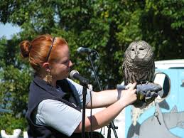celebrate wildlife at the cape cod wildlife festival national