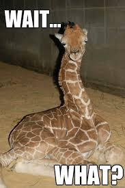 Meme Giraffe - the stoned giraffe memes quickmeme