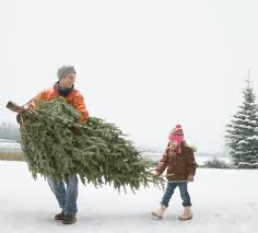the 10 best christmas trees you can buy