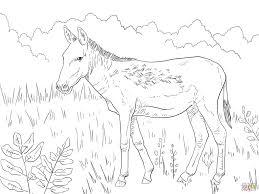 kulan wild for coloring page animal free printable donkeys