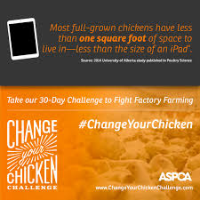 Challenge Your Change Your Chicken