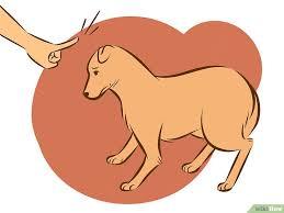 comment empecher mon chien de monter sur le canapé comment empêcher un chien de monter un congénère ou maitre