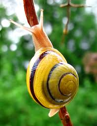 animal handling how can i safely pick up a garden snail pets