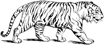 snow tiger coloring page coloring page of a tiger snow leopard coloring pages tiger coloring