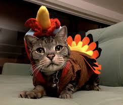 10 reasons to be thankful for your cat this thanksgiving meowingtons