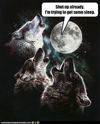 Three Wolf Shirt Meme - animal capshunz three wolf moon funny animal pictures with