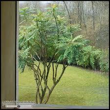 inherently retardant mahonia tree