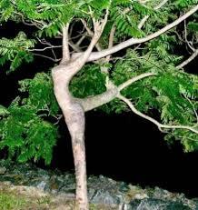 wierd and interesting looking trees