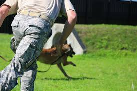 belgian malinois k9 attack what it u0027s like to be attacked by an attack dog