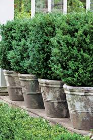 Potted Patio Trees by Spectacular Container Gardening Ideas Southern Living